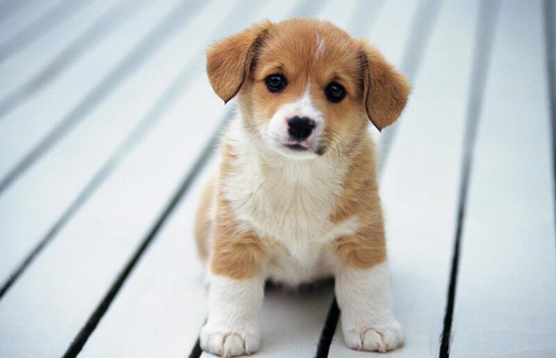 quà tân gia là thú cưng, vật nuôi